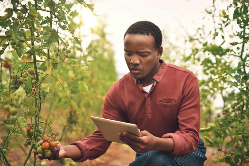 farmer using chatbots in Africa